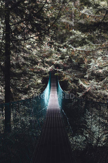Bridge in beautiful evergreen forest during daytime — Photo de stock