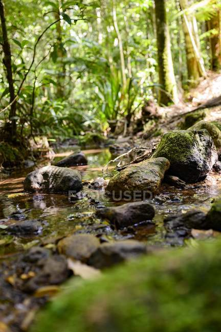 Close-up view of stones covered with green moss in small creek in forest — Stock Photo