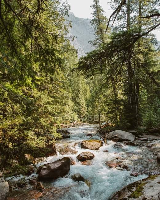 Schöne natürliche Aussicht auf grünen Wald und sprudelnden Bach in den Bergen — Stockfoto
