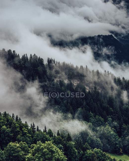 Amazing landscape with clouds and green trees on mountain slope — Fotografia de Stock