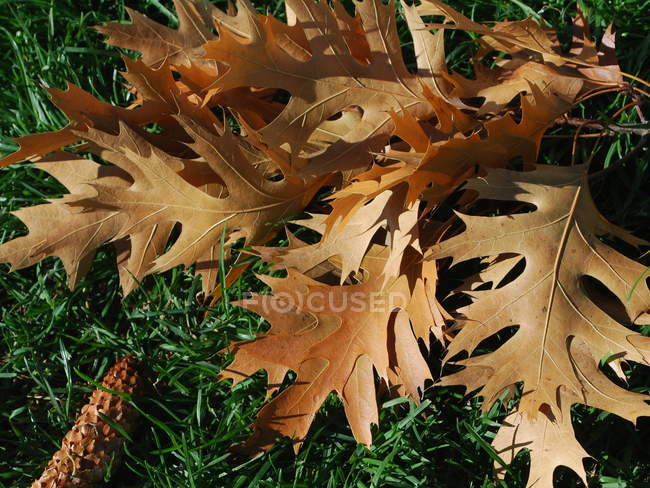 Top view of dry autumn leaves on green grass — Photo de stock
