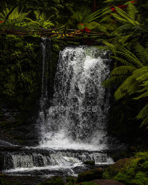 Scenic view of beautiful waterfall and green tropical forest - foto de stock