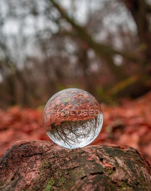 Close-up view of beautiful autumn forest reflected in glass ball, selective focus — Stockfoto