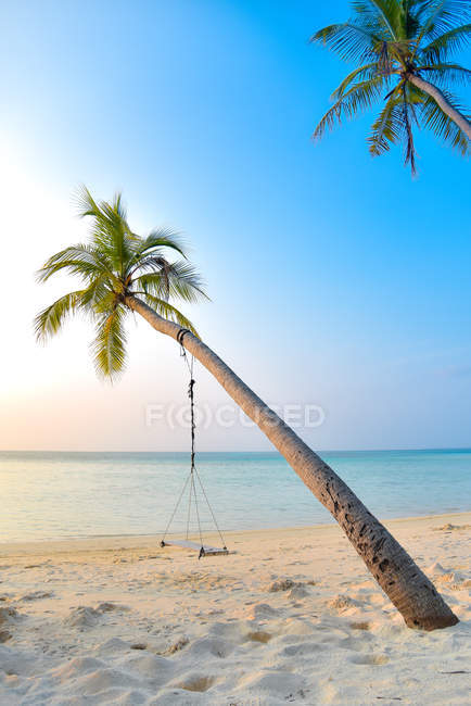 Grey swing hanging on palm tree at sandy beach — стокове фото
