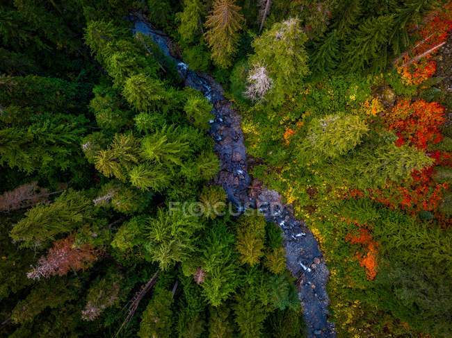 Aerial view of green and brown trees in forest and beautiful rapid river - foto de stock