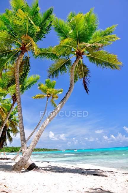 Зелені кокосові дерева на піску біля тіла води в денний час — стокове фото