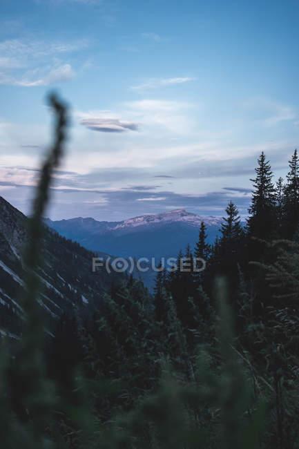 Foco seletivo de montanhas cénicas com vegetação verde luxúria — Fotografia de Stock