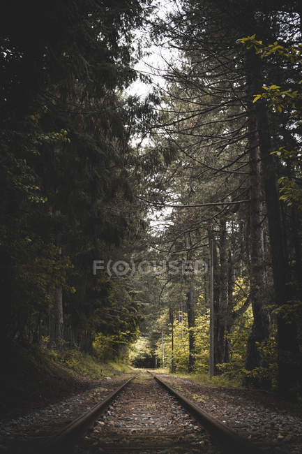 Green leafed trees in forest and railway during daytime — Photo de stock