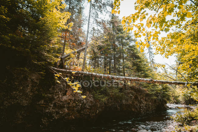 Beautiful landscape with green trees near body of water at sunny day — Stock Photo