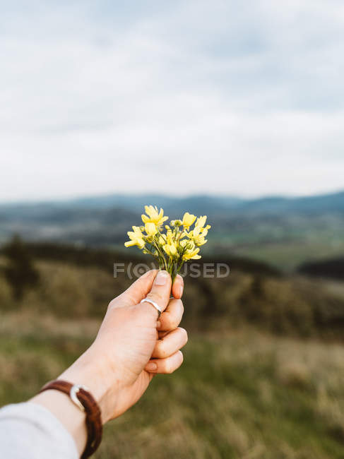 Cropped shot of person holding beautiful yellow wildflowers in mountain landscape — Foto stock