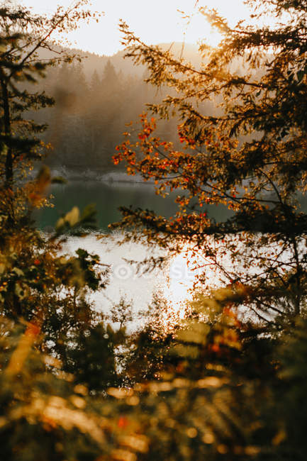 Selective focus of autumn leaves and beautiful calm lake at sunrise — Stock Photo