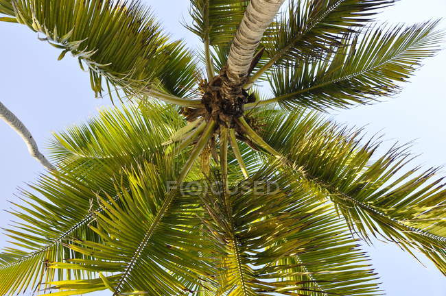 Low angle view of beautiful green coconut palm tree — Photo de stock