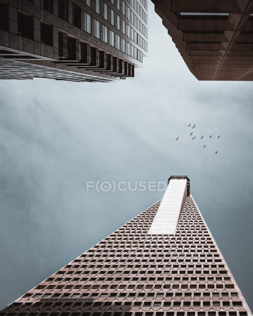 Low angle photography of high-rise buildings and birds flying in cloudy sky — стокове фото