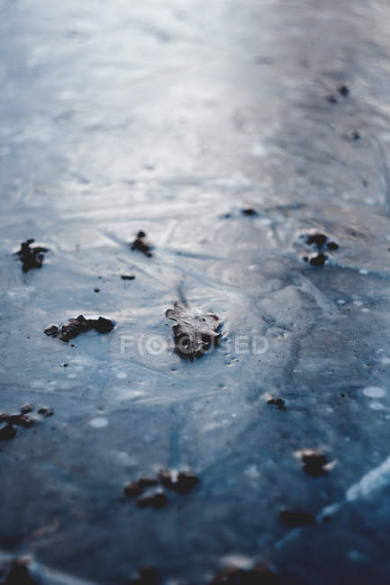 Close-up view of dry autumn leaves on frozen ground at wintertime — Stock Photo