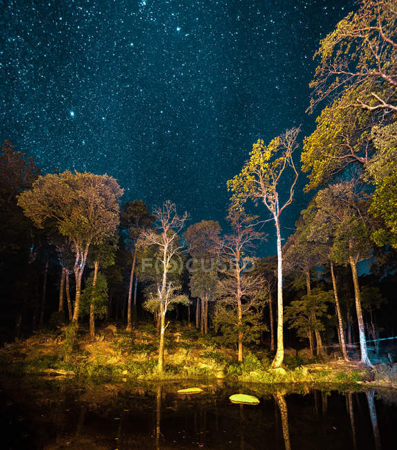 Trees reflected in calm lake and amazing starry sky at night — Foto stock