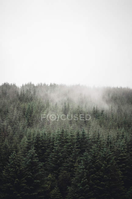 Aerial view of mist covered green trees in forest — Photo de stock