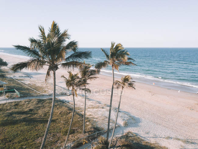 Beautiful palm trees growing on beach near ocean at sunny day — Fotografia de Stock