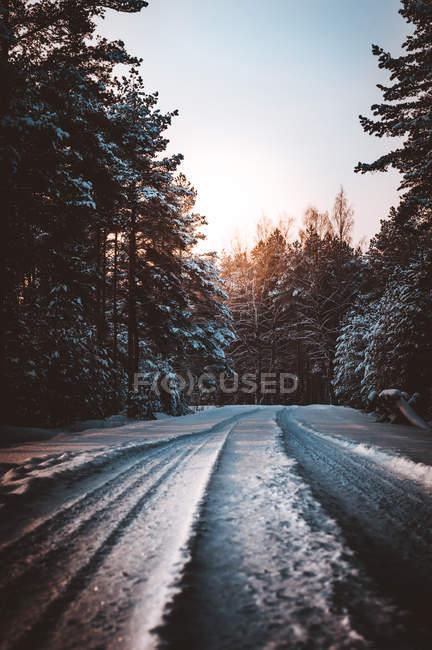 Weg mit Schnee bedeckt zwischen immergrünen Bäumen am Morgen — Stockfoto