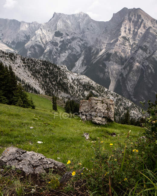 Beautiful yellow flowers on green meadow and scenic rocky mountains — Stockfoto