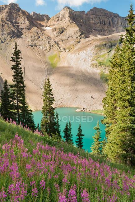 Красивий ландшафт з горами, озером і рожевими квітами на лузі — стокове фото