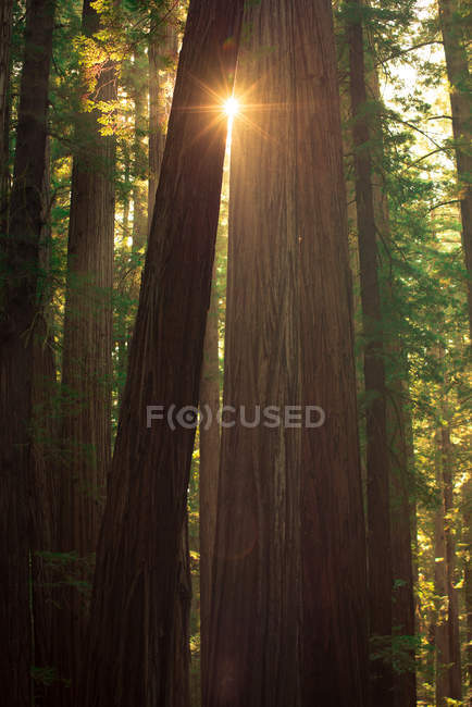 Beautiful natural view with sun rays shining through trees in forest — Foto stock