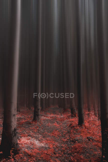 Red leaves on ground and tall trees in dark forest — Photo de stock