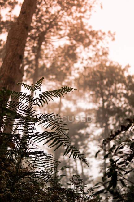 Opinião de baixo ângulo da silhueta do Fern e da floresta bonita no nascer do sol — Fotografia de Stock
