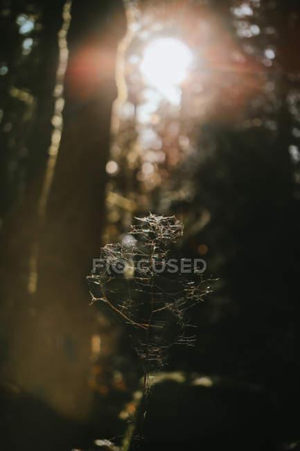 Foco claro do Web de aranha na floresta, opinião do close-up — Fotografia de Stock