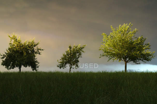Three beautiful trees and green grass under scenic cloudy sky — Foto stock