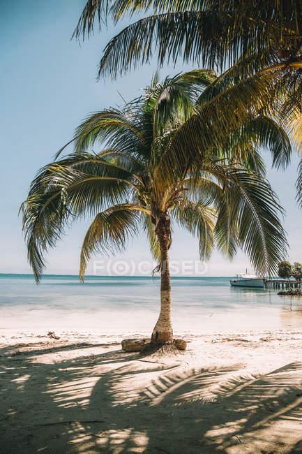 Palmeiras verdes bonitas na praia arenosa no mar — Fotografia de Stock