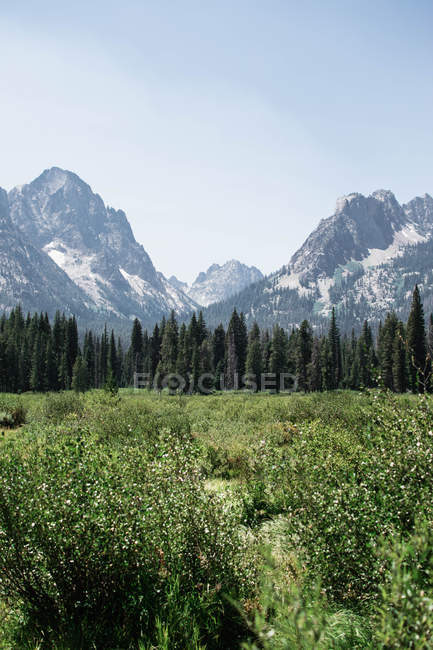Beautiful landscape with green trees on grassland and scenic rocky mountains at sunny day - foto de stock