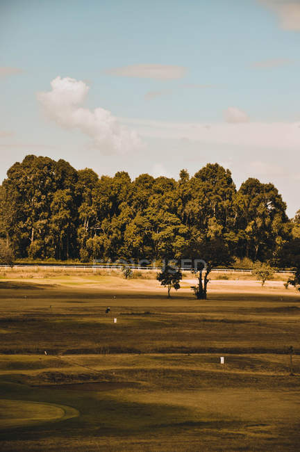 Beautiful landscape with green trees near grassland at sunny day — Photo de stock