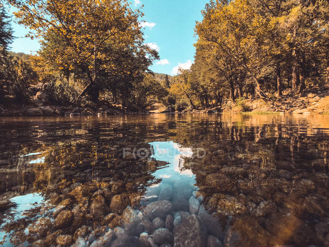 Trees near beautiful calm lake with clear transparent water at sunny day — стоковое фото
