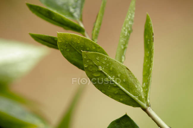 Close-up view of water drops on fresh green leaves — Photo de stock