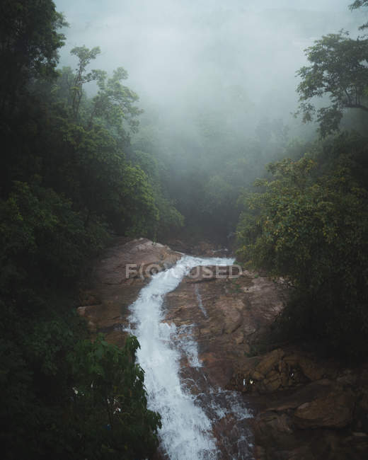 Water flowing from beautiful green forest in mist - foto de stock