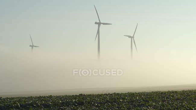 Silhuetas dos moinhos de vento na névoa e no campo verde no nascer do sol — Fotografia de Stock