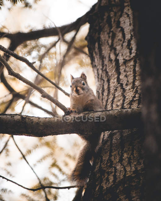 Low angle view of adorable white and gray squirrel on wood branch — Photo de stock