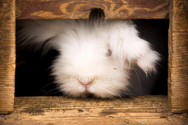 Close-up view of furry white rabbit in brown wooden cage — Photo de stock