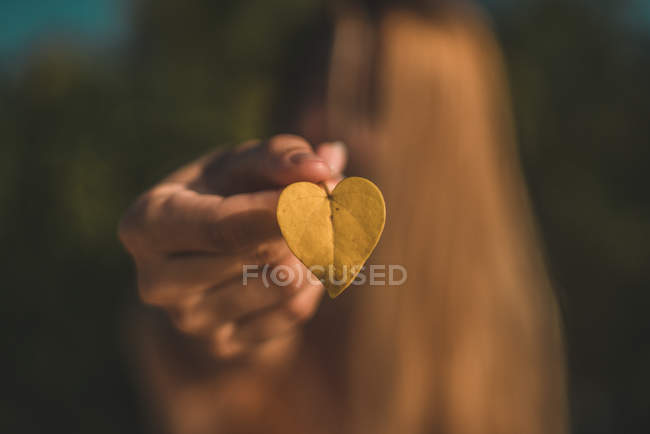 Close-up view of person holding dry yellow leaf, selective focus — Stockfoto