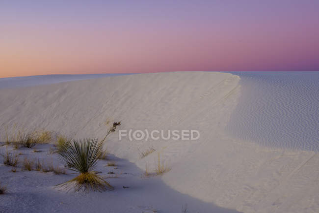 Close-up view of green plants growing in white sand at sunrise — Foto stock