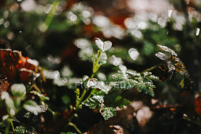 Close-up view of plants with green leaves and raindrops, selective focus — Fotografia de Stock