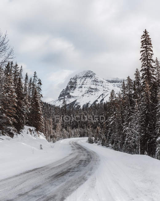 Plowed road, fir trees and snow-covered mountains at wintertime — Foto stock