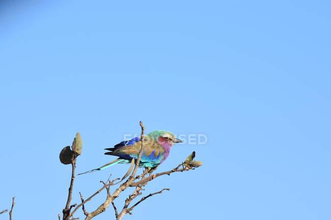 Hermoso pájaro colorido posando en la rama del árbol contra el cielo azul - foto de stock