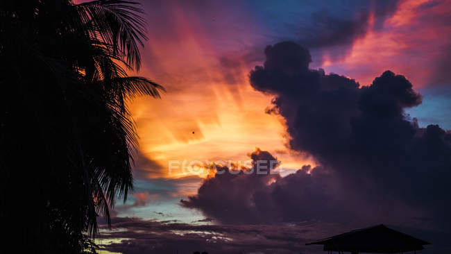 Silhouette of palm leaves against colorful sunset sky - foto de stock