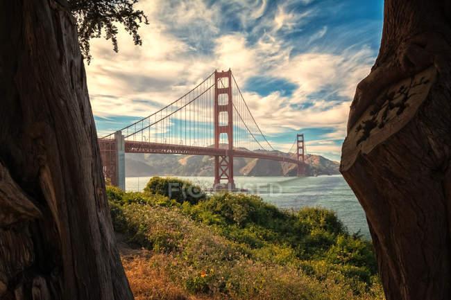 Foco seletivo das árvores e da ponte de porta dourada famosa, San Francisco, Califórnia — Fotografia de Stock