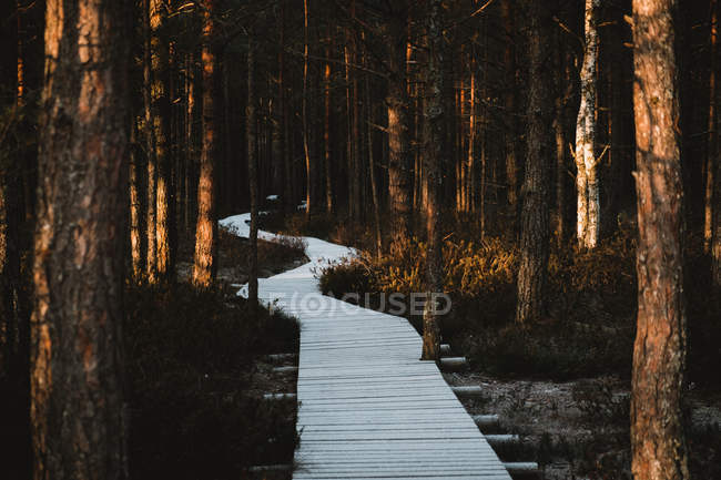 Empty wooden trail in beautiful forest with tall trees — Photo de stock