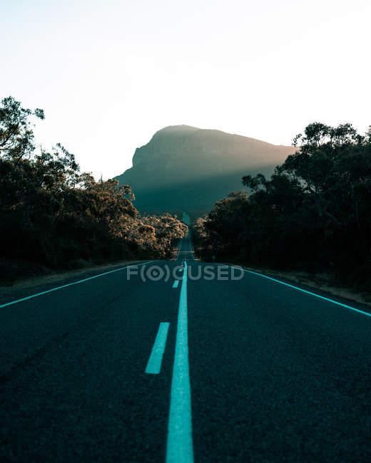 Strada asfaltata vuota tra gli alberi verdi al tramonto — Foto stock