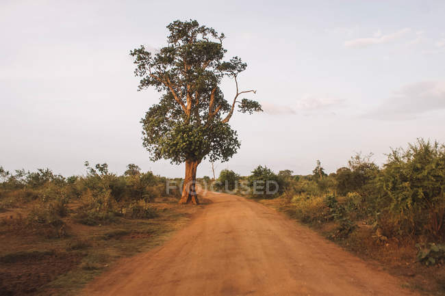 Beautiful landscape with single tall tree and green bushes in savanna — Photo de stock