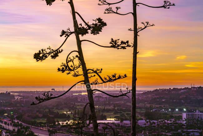 Árvores altas e arquitectura da cidade bonita no por do sol cénico — Fotografia de Stock