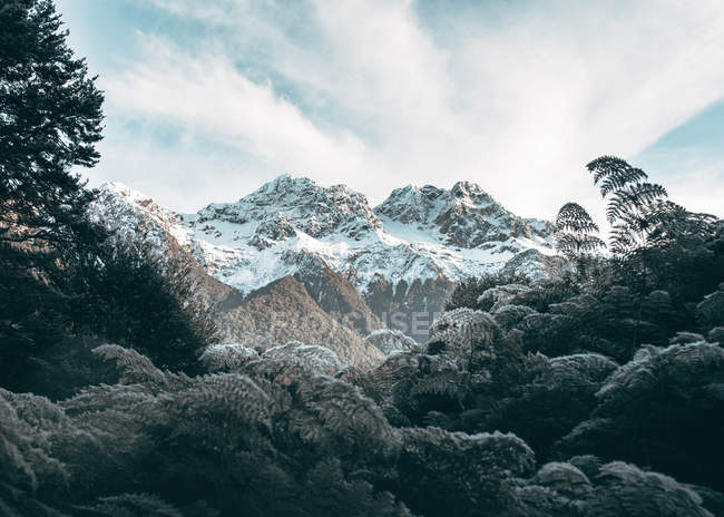 Beautiful landscape with snow capped mountains and lush vegetation — Photo de stock